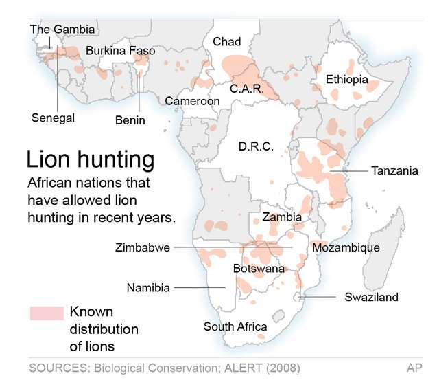 GOD POWER - FELINE POWER: THE PROBLEM OF LION HUNTING. AMERICAN HUNTERS ARE KILLING NEARLY 600 LIONS EVERY YEAR IN AFRICA. IT IS A MATTER OF NATIONAL SHAME.