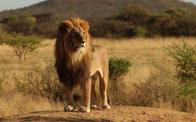 GOD POWER - FELINE POWER: PUMA PUNKU DIVINE SOCIETY ACKNOWLEDGES FELINE POWER AS GOD POWER. SHOW RESPECT TO AFRICAN LION.