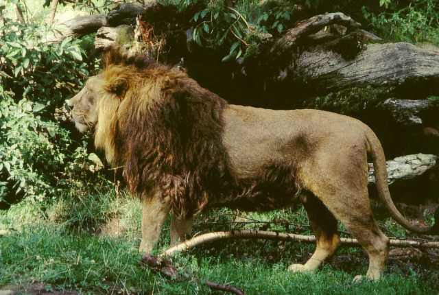 GOD POWER - FELINE POWER: PANTHERA LEO. BIG CAT FAMILY DESERVE SPECIAL RECOGNITION FOR THEY REPRESENT GOD'S ENERGY/POWER/FORCE THAT SYMBOLIZES GOD AS FEMALE.