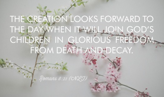 #25For25 NEW BEGINNING, NEW CREATION, LIFE BY THE SPIRIT. LIBERATION FROM DECAY, AND GLORIOUS FREEDOM OF THE CHILDREN OF GOD. ROMANS, 8:21.